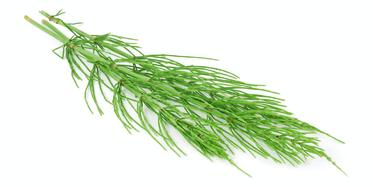 Horsetail extract in hair growth supplements